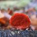 Mushrooms & Fungi 2013