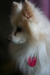 Pixie Profile   by Bernzilla