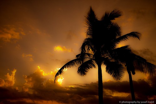 view beach orange yellow sea plamtrees sunset clouds cloudsstormssunsetssunrises beacheslandscapes