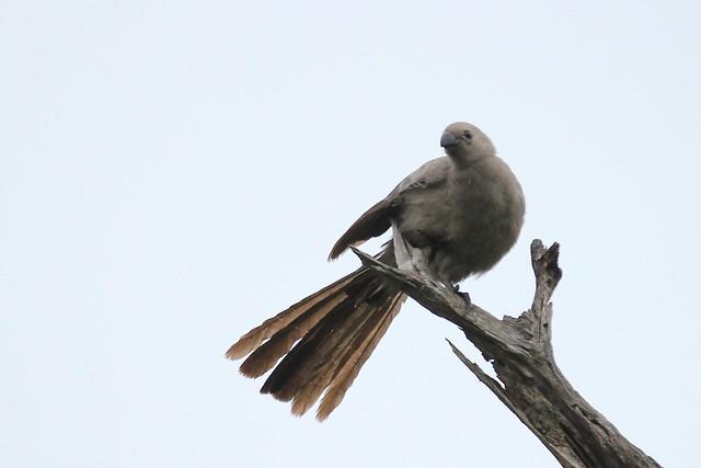 Go Away Bird - Pilanesberg, South Africa, 2012.