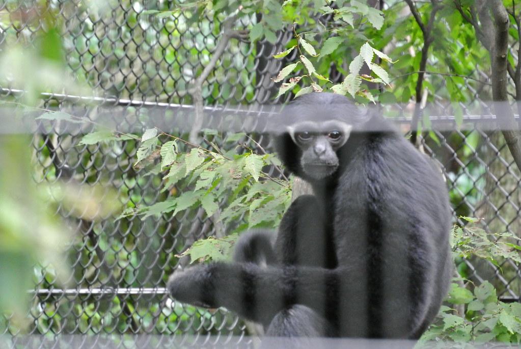 動物園 ズーラシア