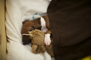 Nap Time | by Brian Reiter