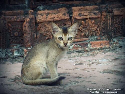 nature true cat eyes kitten natural sony sonyericsson tiger fine curious cutecat cutekitten smallcat littletiger beaitiful lovelycat curiouseyes xperia xperianeo