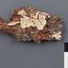 Cylindrobasidium