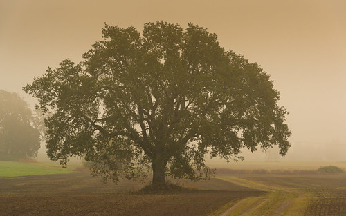 morning autumn tree nature fog oregon sunrise oak october lone hillsboro aloha 2012 reedville