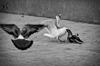 Hungry | by Carlos Larios - Fotolarios
