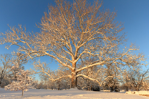 park winter light snow tree weather sunrise dawn golden providence rhodeisland rogerwilliampark