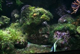 Underwater World Langkawi | by Phalinn Ooi