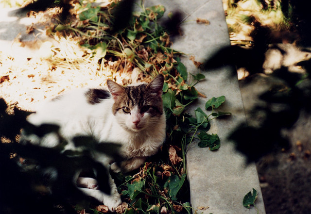 Cat [Leica Tele-Elmar 135mm test @ f/4]