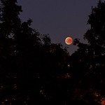 Lunar eclipse (Mondfinsternis) in Berlin  | #VFBLN