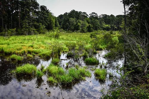 williamsburg virginia unitedstates us back river wetlands historic jamestowne jamestown va usa american america swamp water backwater