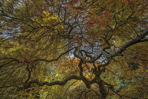 mtmacedon autumncolours sony a7r3 voigtlander15mmheliariii