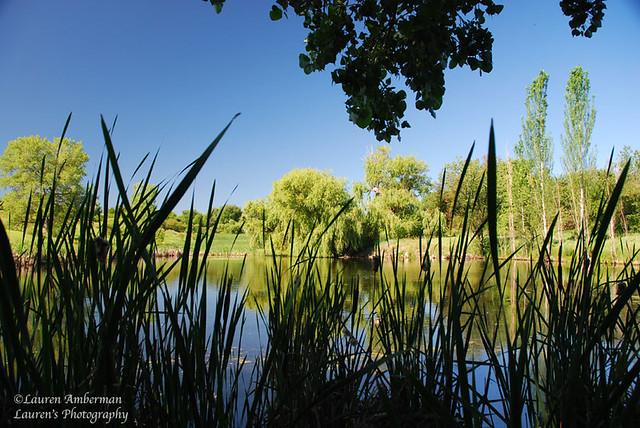 One pond at Two Ponds Refuge