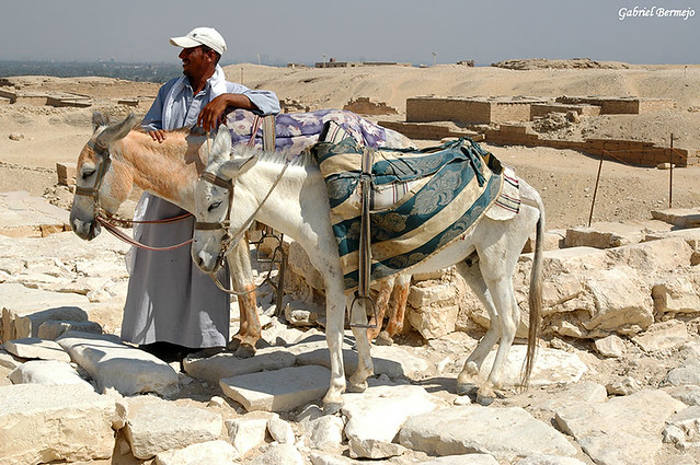 Un paseo en burro - Saqqara