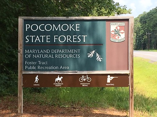 Photo of entrance sign for Pocomoke State Forest recreational area