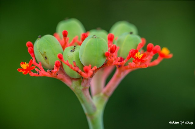 Buds and Depth of Field