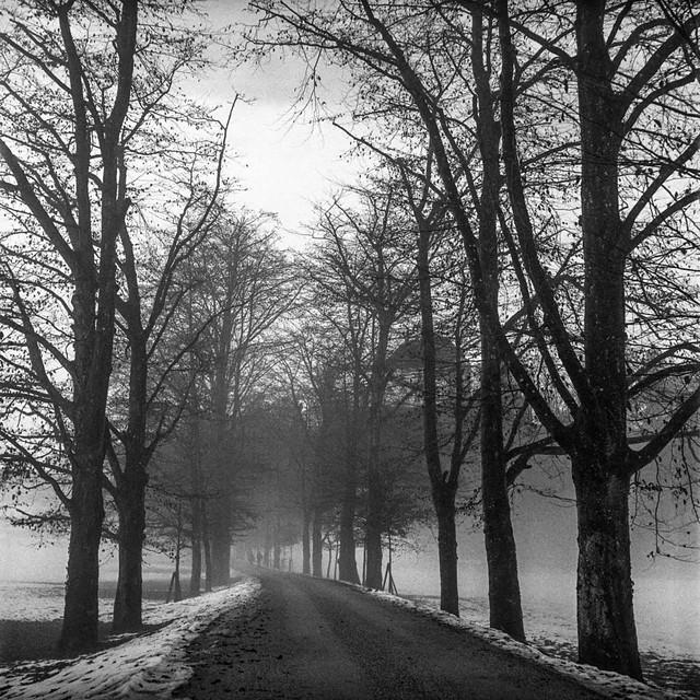 A walk in the winter wonderland VII