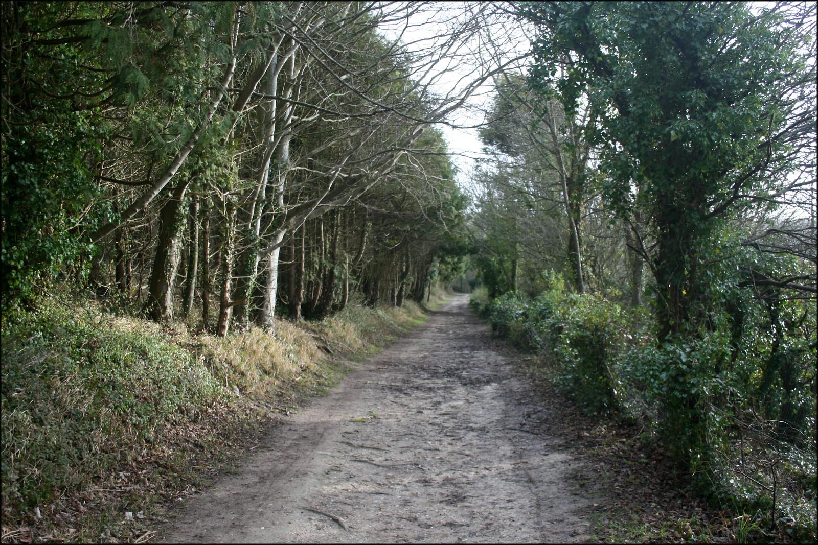 Friston Forest near Litlington