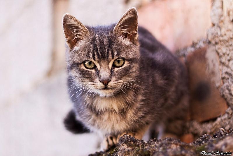 Cat in the roof/ Gato en el tejado