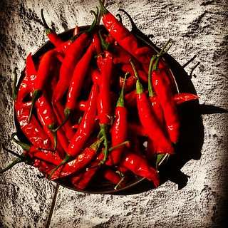 Capsaicin overload | by pangalactic gargleblaster and the heart of gold