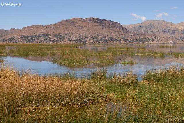 Reflejos y totora - Lago Titicaca