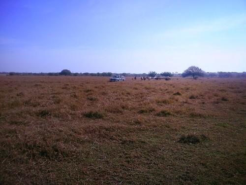 sky mexico cows tamaulipas