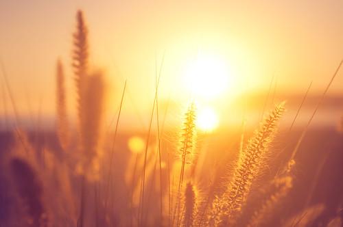 california sunset grass golden coronado chasinglight pixelmama