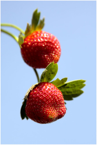 Sweet Strawberrys (_MG_1773) | by ramnath bhat