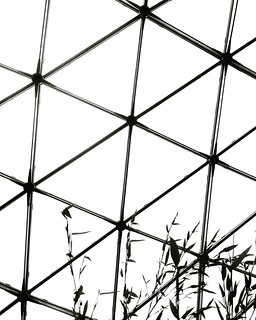 Lines and bamboo  #monochrome #blackandwhite #bw #biancoenero #lines #geometry #web #lines #highcontrast #black #white #minimal #minimalist #minimalistic #minimalism #lessismore #Beautiful #bamboo #nocolor #bicolor #Photography #photo #igersmilano #abstra | by Mario De Carli