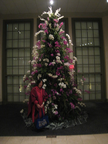 Me and the orchid tree
