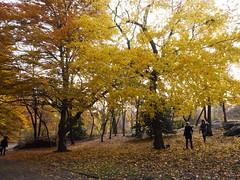 日, 2012-11-18 16:13 - Central Parkの紅葉