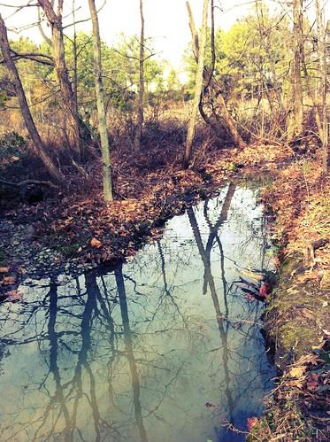 5cardflickr uploaded:by=flickrmobile flickriosapp:filter=chameleon chameleonfilter