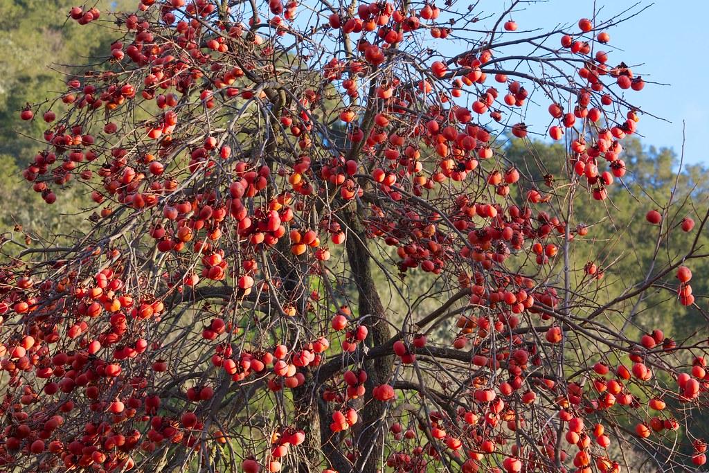 Bounteous Tree