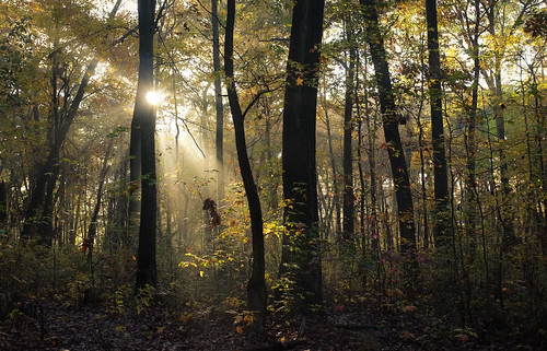 trees sun mist leaves yellow fog forest foggy nj sunburst eastbrunswick dallenbach