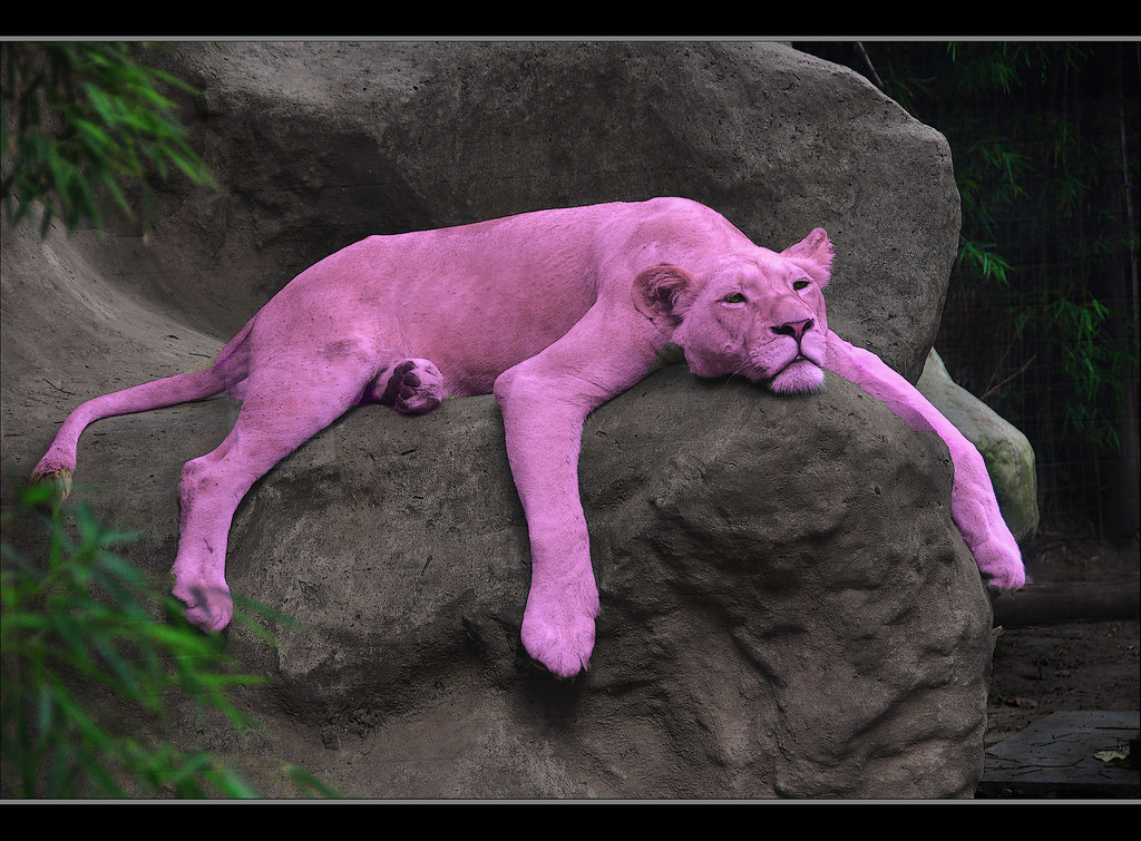 Pink Pahnter