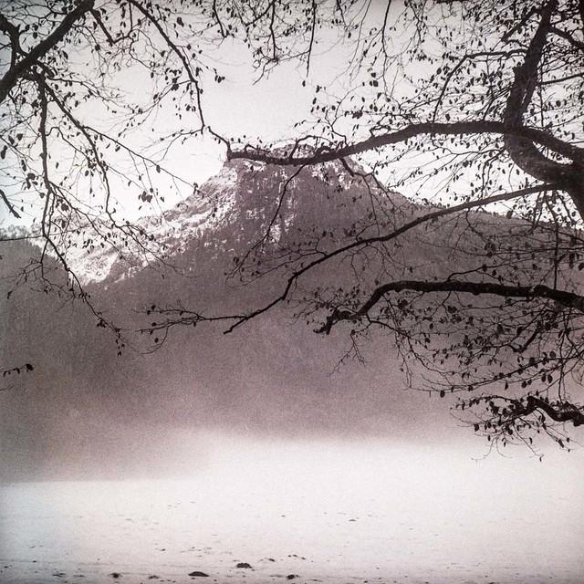 A walk in the winter wonderland X