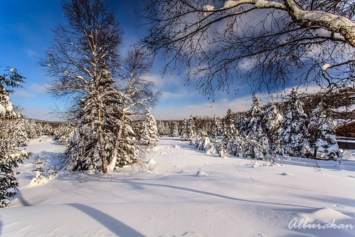 new snow tree pine landscapes year resort blueberry icicle chalet