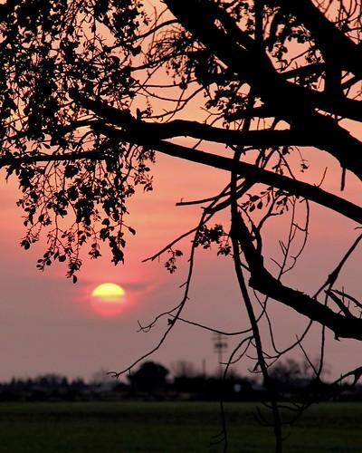 sunrise dixon solanocounty silveyville