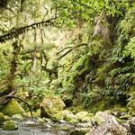 Nueva Zelanda, Isla Sur 38