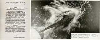 1904 Order of Protection for Risso's dolphins, and photograph of Pelorus Jack | by Archives New Zealand