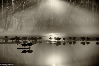 Geese sleeping at Minerva Lake | by bizzano