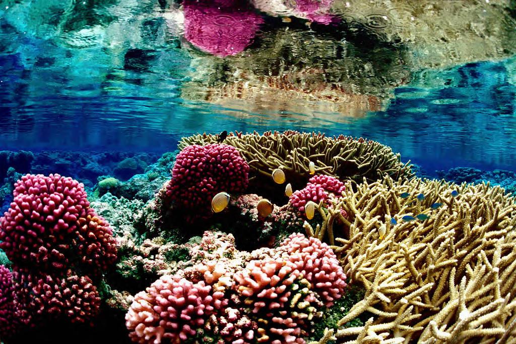 Coral Reef at Palmyra Atoll National Wildlife Refuge - USFWS Headquarters