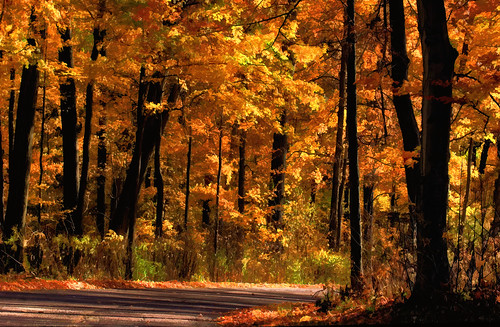 road park autumn trees ohio red orange sun sunlight black fall leaves fun gold saturated october glow cincinnati downhill glowing tall trunks straight curve sharonwoods paintingeffect topazsimplify