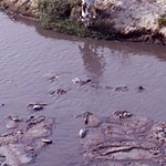 Untreated effluents from leather industry, Uttar Pradesh