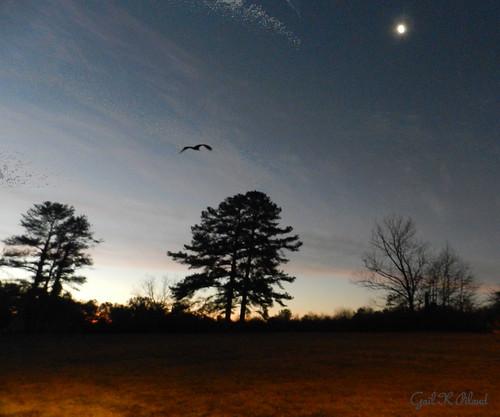 morning trees sky moon landscape dawn soe autofocus thegalaxy flickraward theunforgettablepictures theperfectphotographer thebestofday nikonflickraward ringexcellence flickrstruereflection1 rememberthatmomentlevel1 me2youphotographylevel1 rememberthatmomentl1