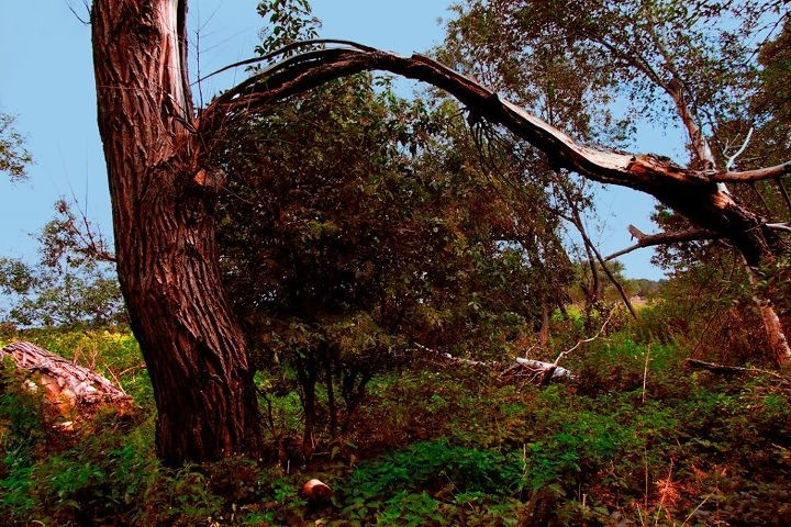 Baum Blitzeinschlag
