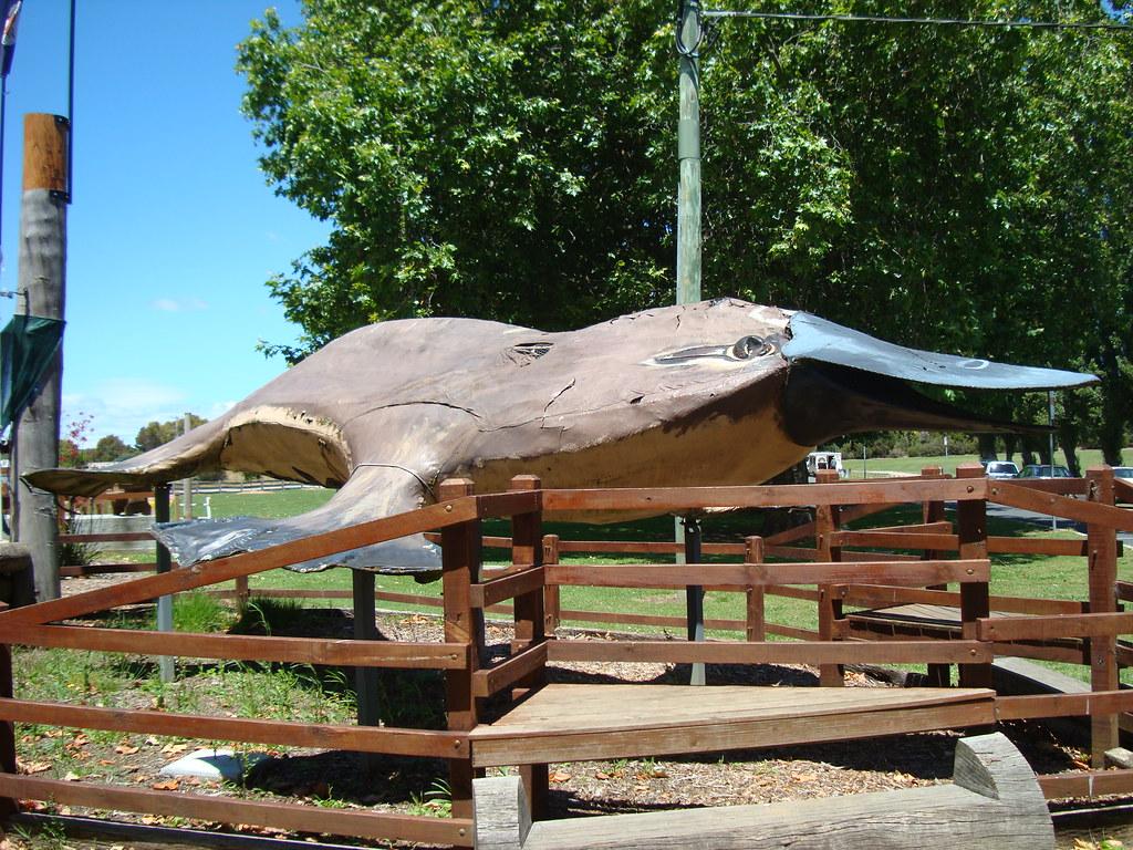 Giant platypus in Latrobe