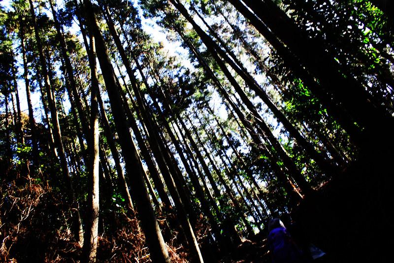 20130127_大野山_0018