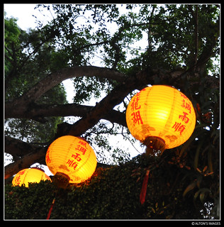 Lanterns at the Tree Shrine