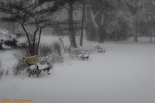 2-26-13  Snows-6